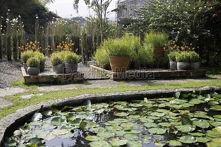 ornamental plant in the garden