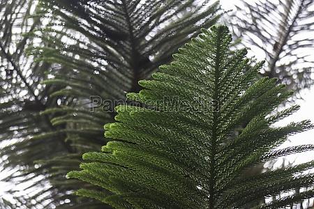 green leaves plant interior cozy coffee