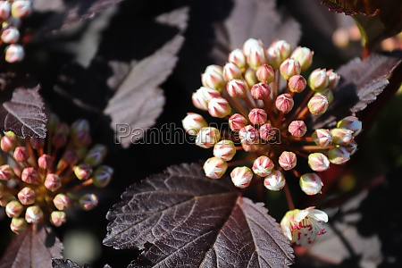 a cluster of blossoms on a