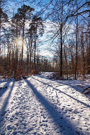forest path in the snow