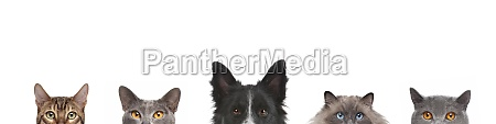 cropped view of dog head and