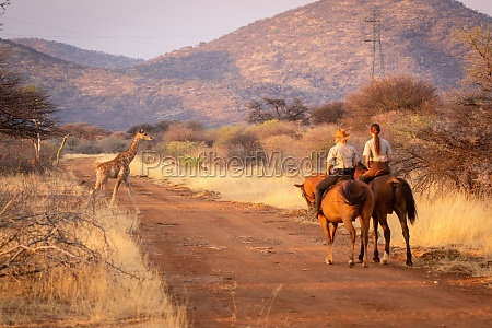 two women riders watch giraffe cross