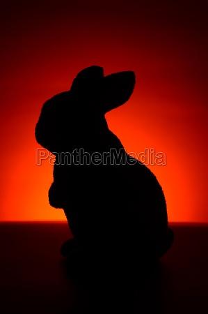furry bunny rabbit