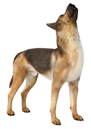 3d rendering german shepherd on white