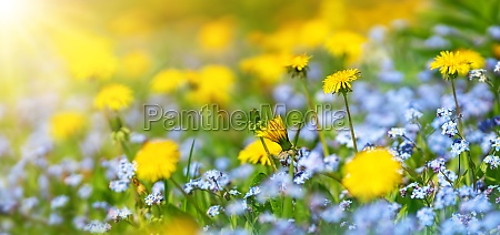 meadow with lots of colorful spring