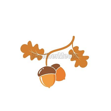 oak acorn vector illustration design