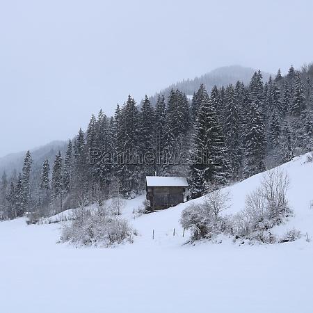 wintery scene near gstaad