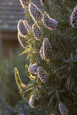 plant with purple flowers in afternoon