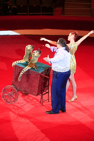 nasough in circus small rodents making