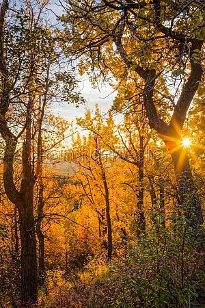 setting sun beam through fall coloured