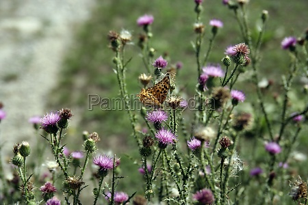 colorful butterfly on a meadow