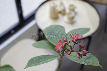 indoors garden plant pot decoration