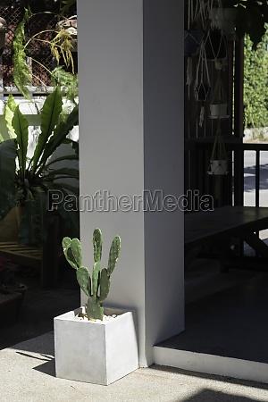 outdoors garden plant pot decoration