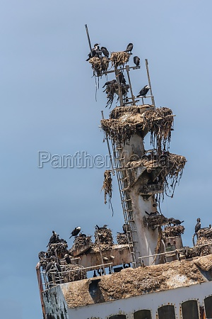 shipwreck zeila near henties bay on