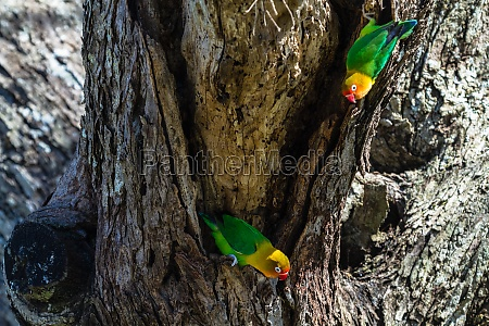 the parrots selects the nest in