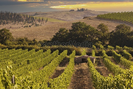 tuscanys most famous vineyards near town
