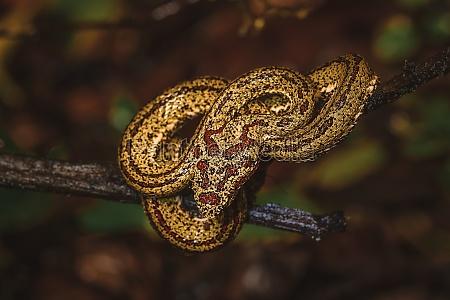 wild snake