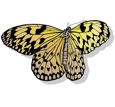 yellow rice paper butterfly