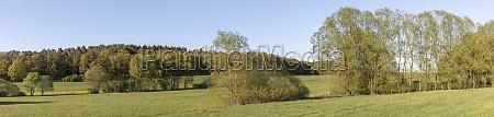 meadows in summer