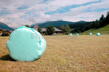 haylage bales on field in summer