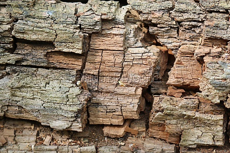 decaying tree trunk for wildlife