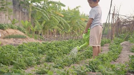 asian little child boy preschool growing