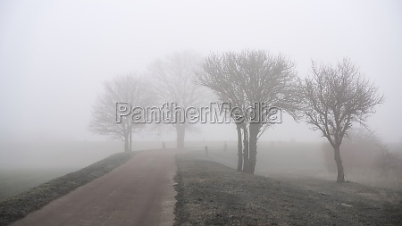 fog landscape with trees on the
