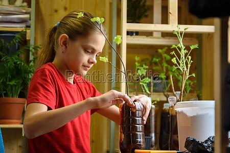 a girl plants seedlings of fruit