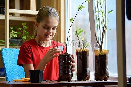 a girl after transplanting seedlings puts