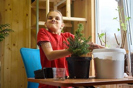a girl transplants a spruce seedling