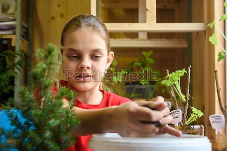 the girl takes the soil from