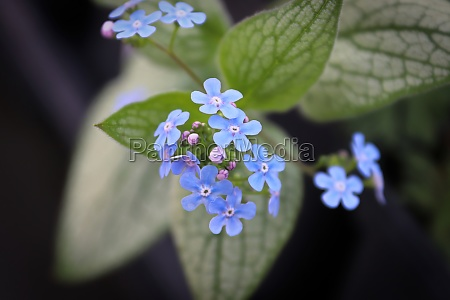 delicate blue and purple flowers on