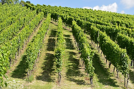 hilly vineyard 7 stuttgart