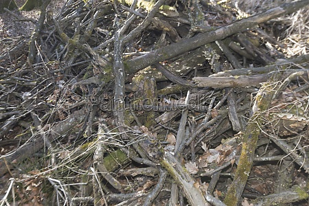 deadwood in the forest caused by