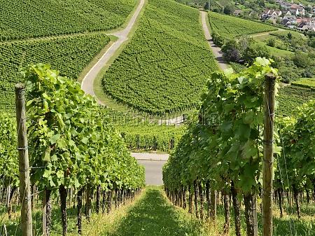 hilly vineyard 17 stuttgart
