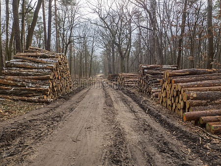 stacked logs in the forest