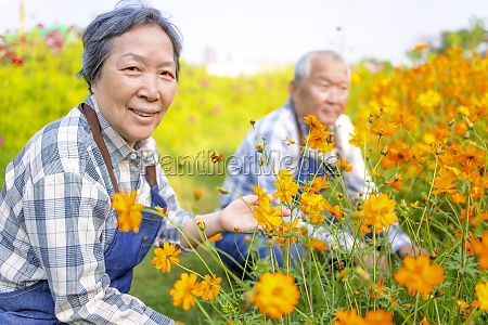 happy asian senior couple working in