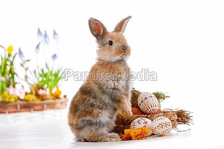 cute dwarf rabbit with easter motif
