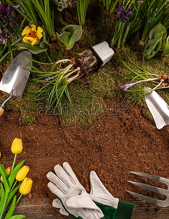 spring flowers and gardening tools