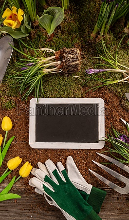 beautiful spring flowers and gardening tools