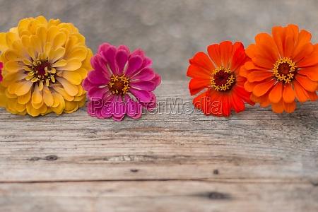 arrangement of beautiful cute flowers on