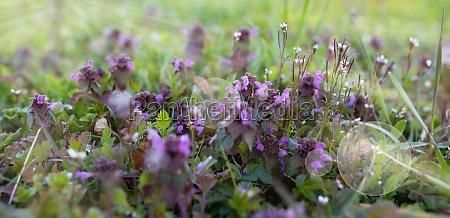 purple blooming flowers in spring
