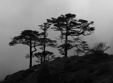 trees growing in high altitude everest