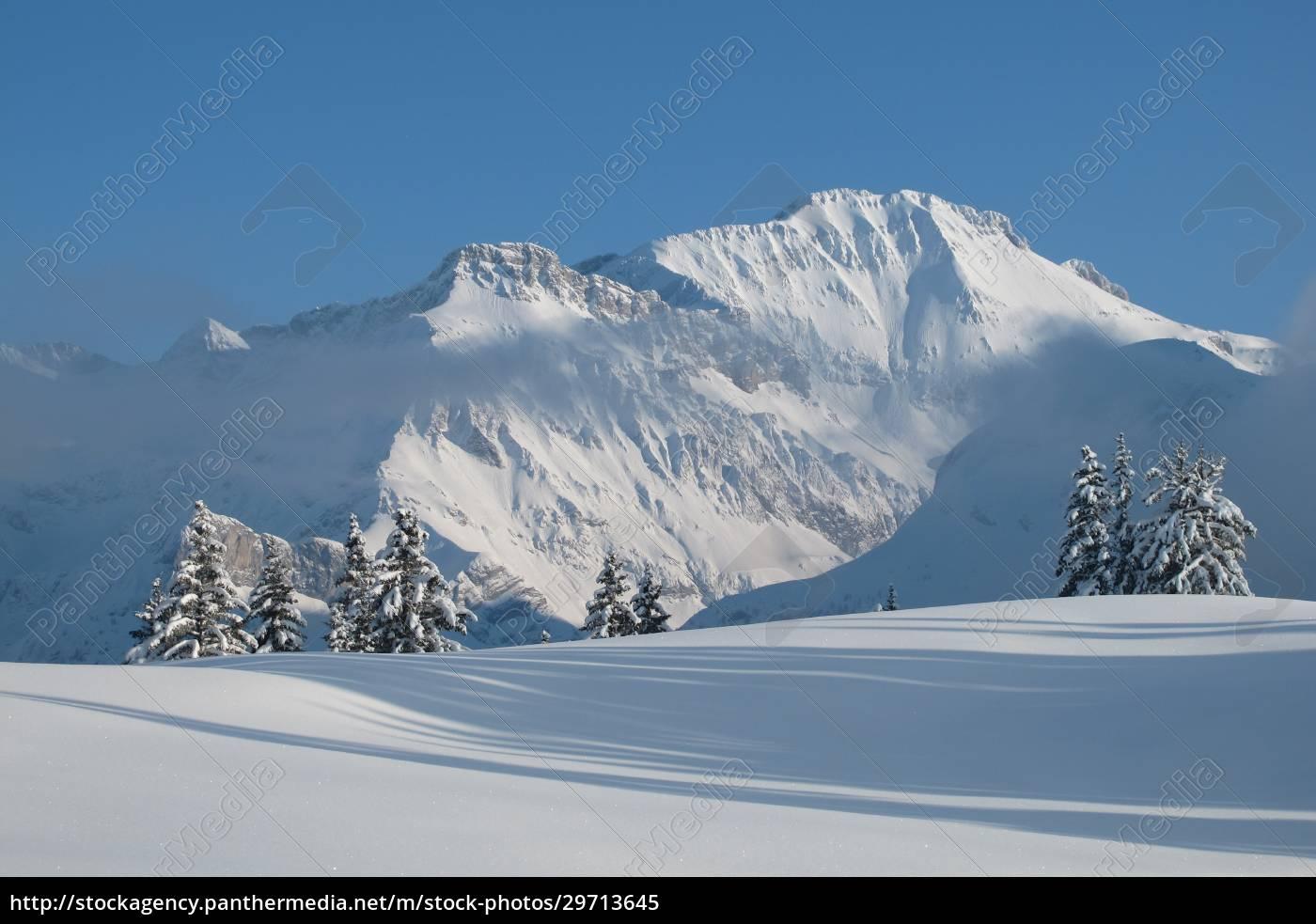 majestic, willdhorn - 29713645