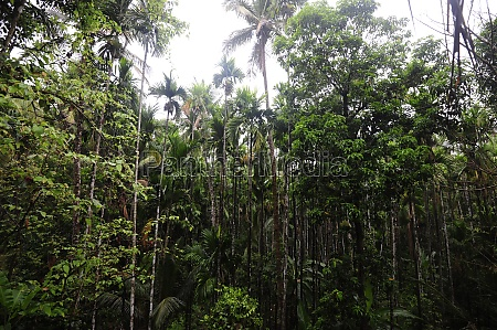 jungle in south india green plants