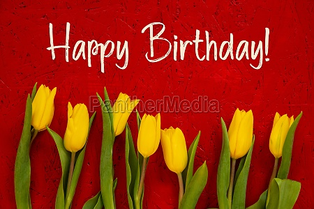 yellow tulip flowers red background text
