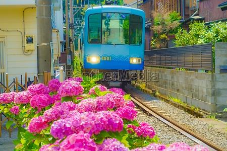 hydrangea and enoshima electric railway