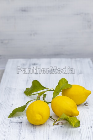 still life with lemons with leaves