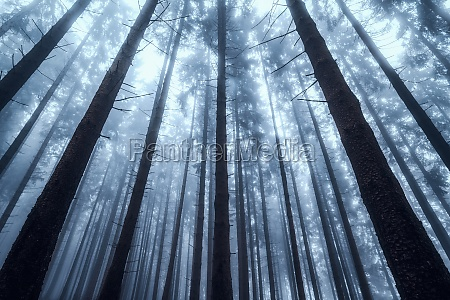 silhouettes of tree trunks in a