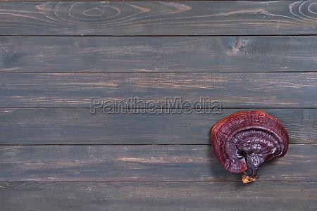 close up of ling zhi mushroom